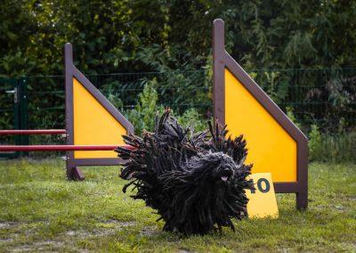 Hundeschule Natascha Simbrey in Berlin-Brandenburg