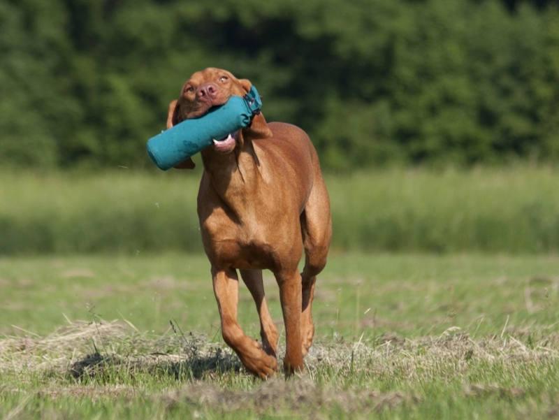Anti-Jagd-Training Hundeschule Berlin-Brandenburg