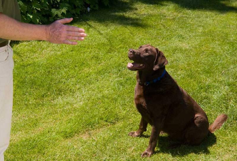 Grundgehorsam Training Hundeschule Berlin-Brandenburg