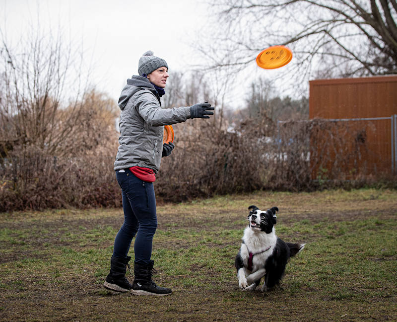 Disc-Dogging Dog Frisbee