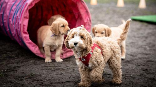 Hundeschule für junge Hunde und Welpen