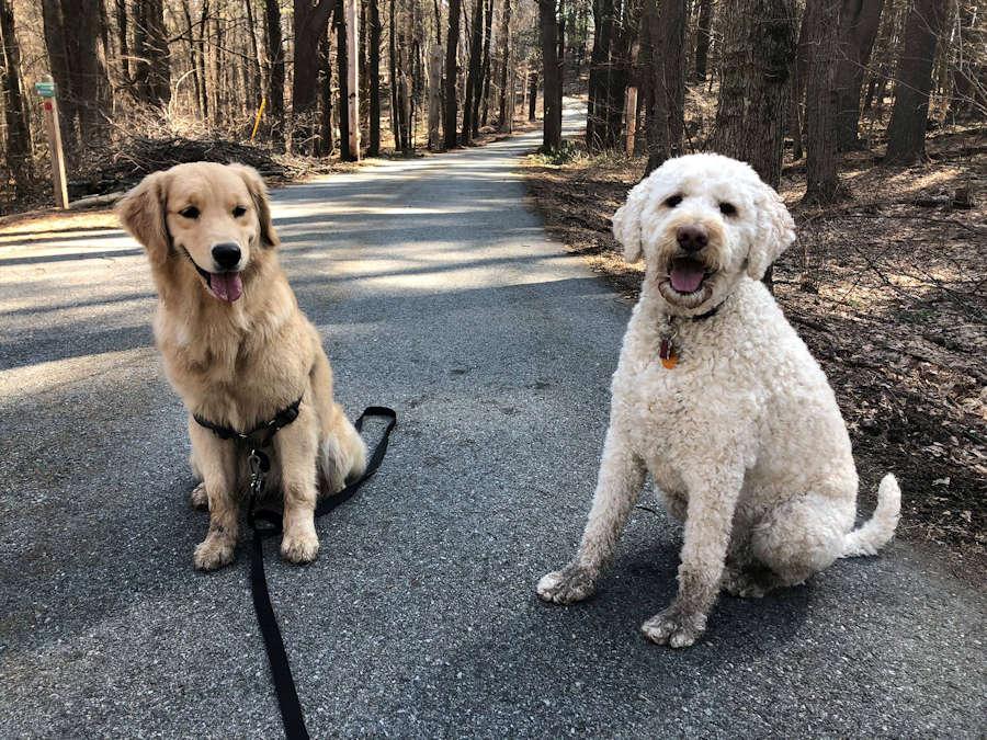Mit Hundeführerschein ohne Leine Gassi gehen