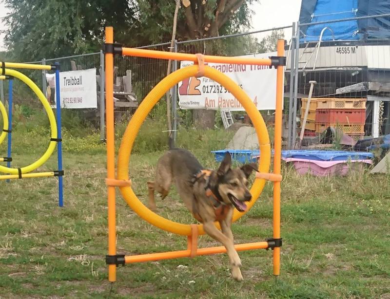 Agility-Training Hundeschule Berlin-Brandenburg