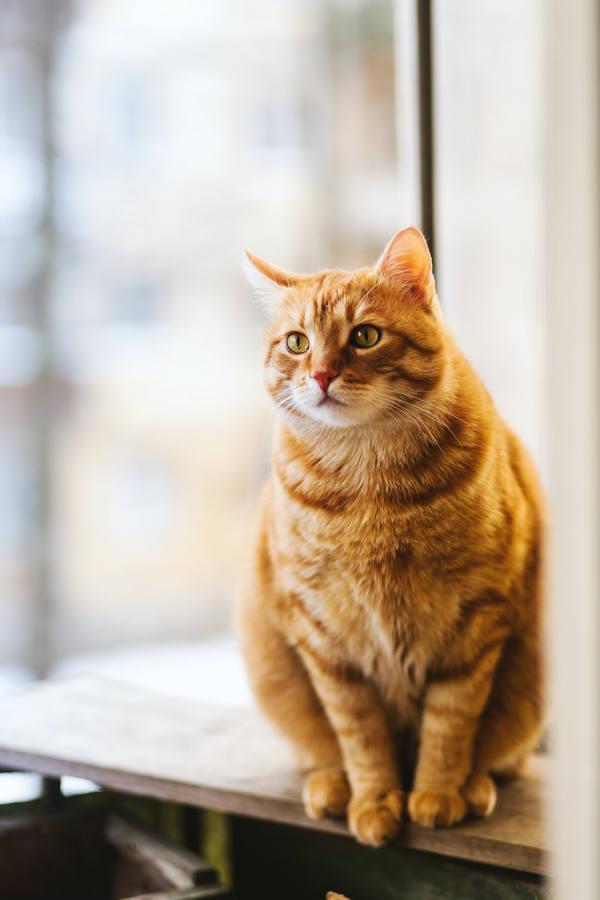 Verhaltenstherapie für Katzen
