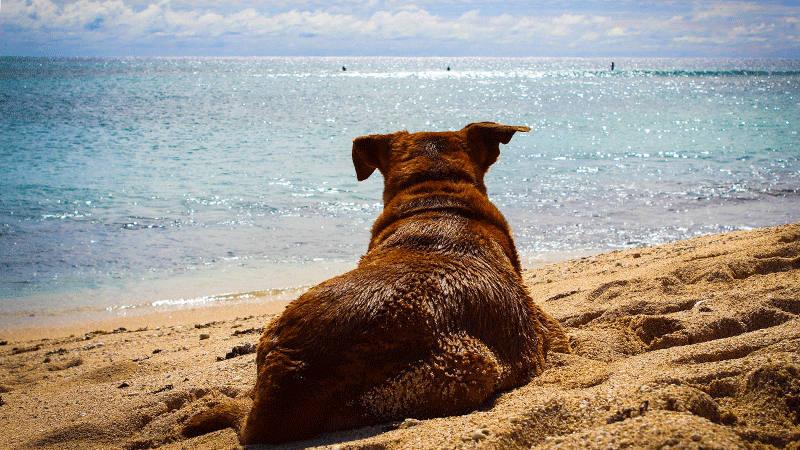 Das Team der Haustier-Therapie macht Sommerferien vom 28.6. - 9.7.